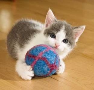 Giochi per gatti : i migliori per il tuo gatto - ACCESSORIGATTI