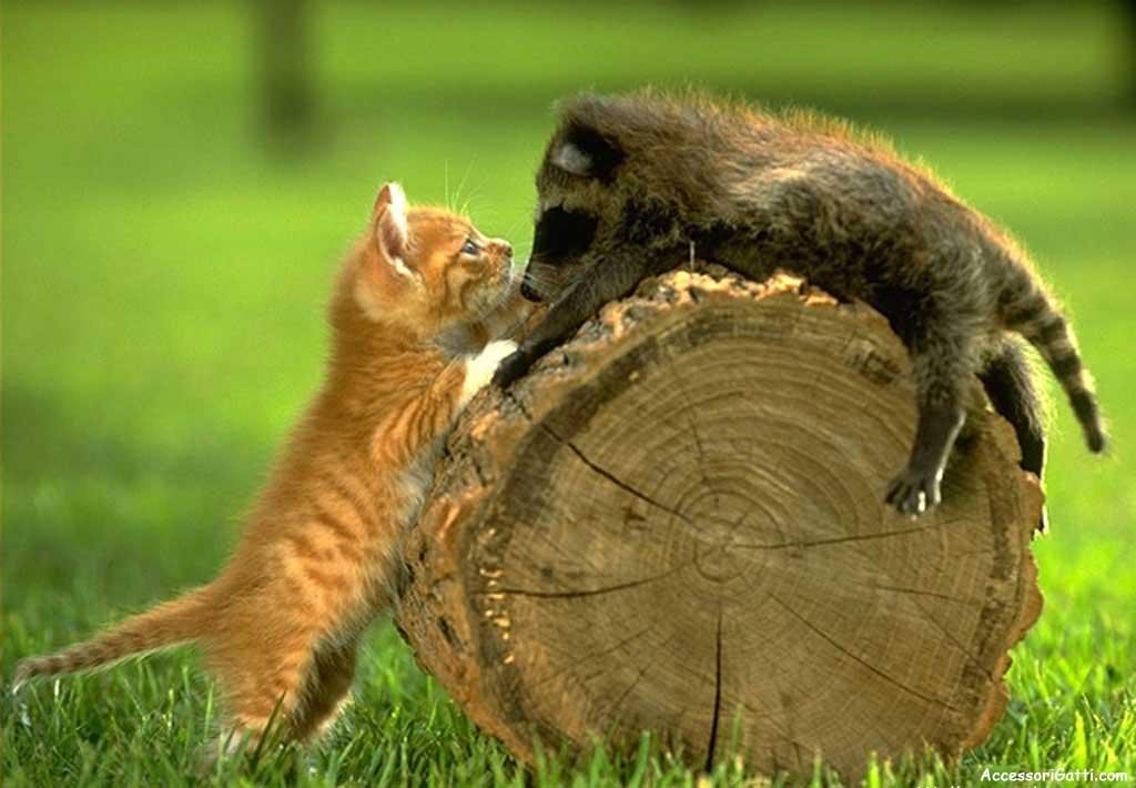 ma che strana amicizia! dans amici animali amici veri strano